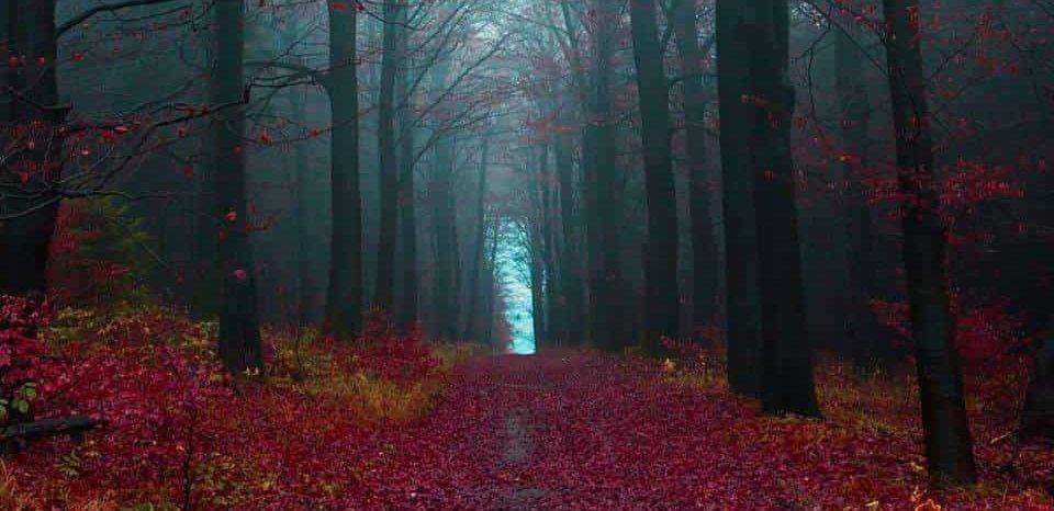 Il Sentiero Dei Tarocchi